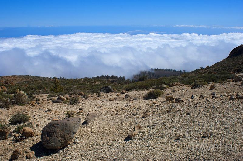 На горе Гуахара, остров Тенерифе, Испания / Фото из Испании