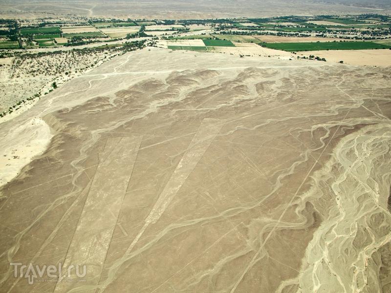 Линии Наски впервые были замечены в 1939 году американским археологом Полом Косоком, Перу / Перу