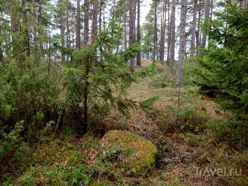 На острове Океттума, Финляндия / Фото из Финляндии