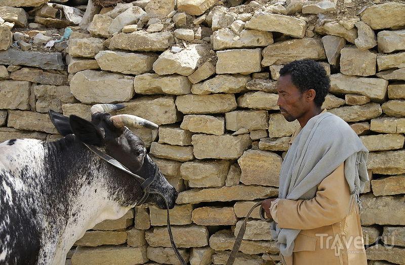 В области Тиграй, Эфиопия / Фото из Эфиопии