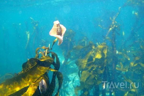 Под водой в Кейптауне / ЮАР