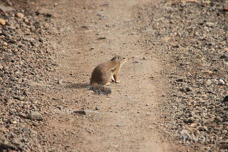 В национальном парке Нечисар, Эфиопия / Фото из Эфиопии
