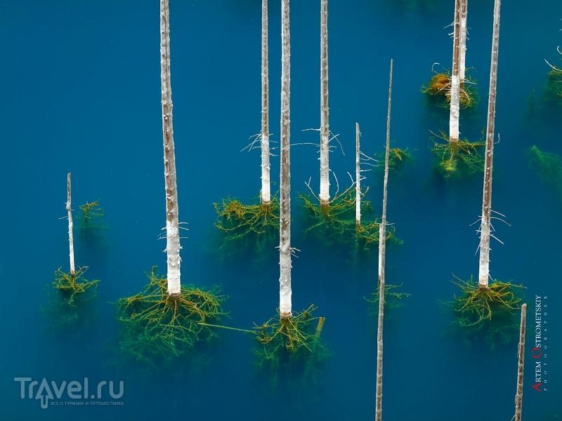 Под бирюзового цвета водой можно обнаружить хорошо сохранившиеся ветки и иголки, Казахстан / Казахстан