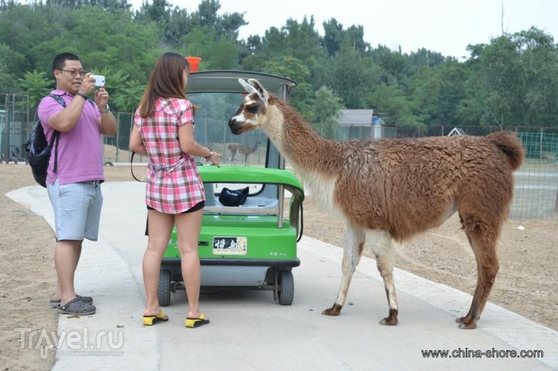 """""""Дикий зоопарк"""" в южном Подпекинье / Китай"""