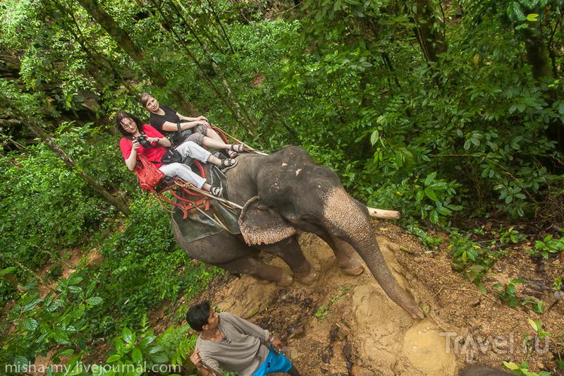 Поход в национальный парк Khao Sok / Таиланд
