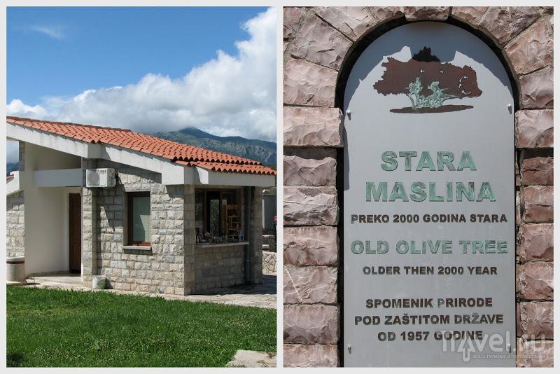 Краски Старого Бара / Фото из Черногории