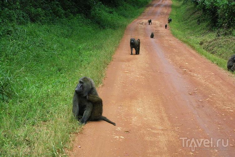 Мёрчисон-Фолс / Фото из Уганды