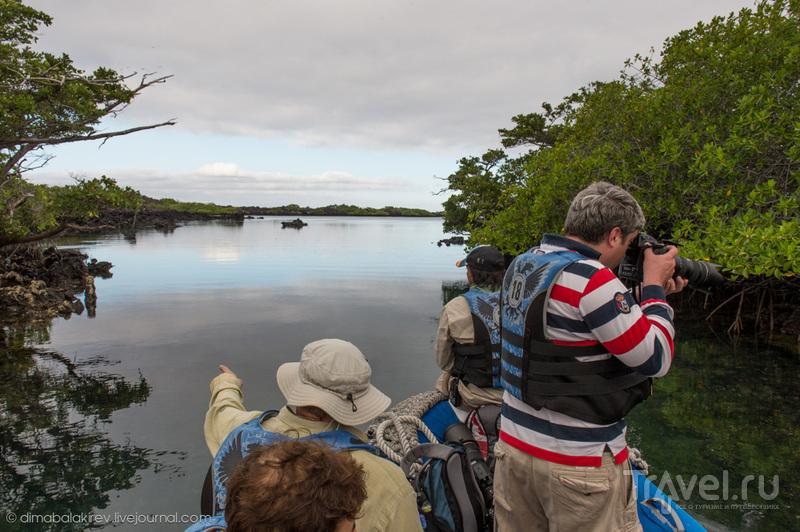 Галапагосы. Мыс Морено и бухта Элизабет / Фото из Эквадора