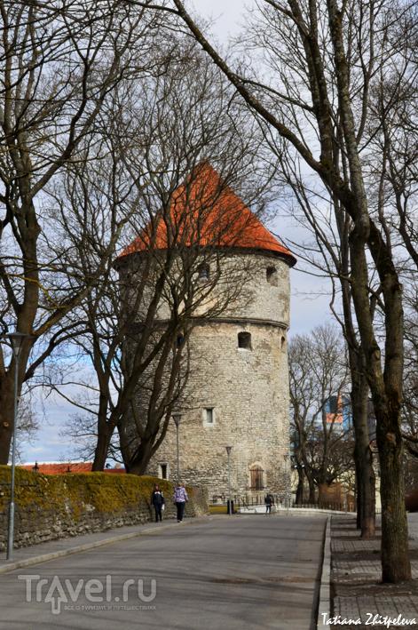 Башня Кик-ин-де-Кёк в Таллине, Эстония / Фото из Эстонии