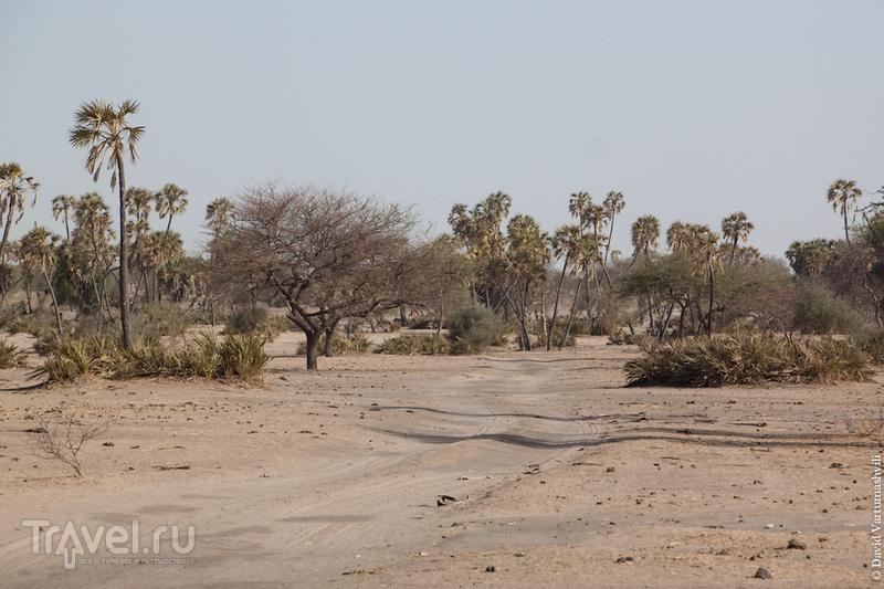 Федеральная трасса Север-Юг, Чад / Фото из Чада