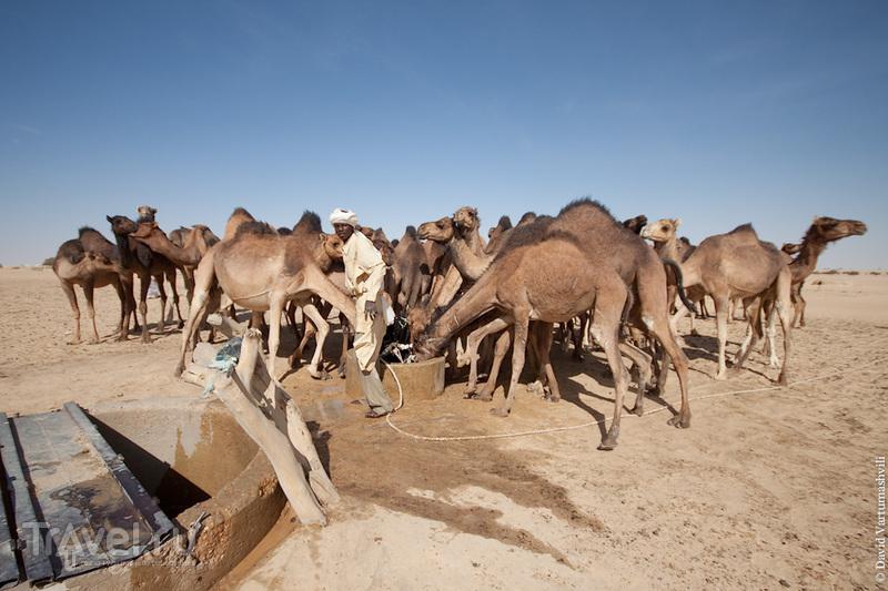 В городе Сала, Чад / Фото из Чада