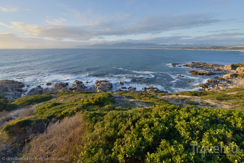 Побережье ЮАР. Grootbos Private Nature Reserve / ЮАР