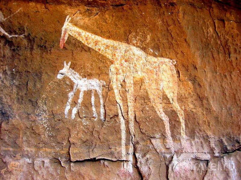 Изображение жирафа и осла в горном массиве Адрарт-Акакус, Ливия / Ливия