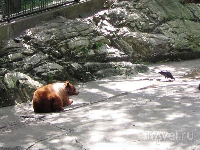 Медвежья гора / США