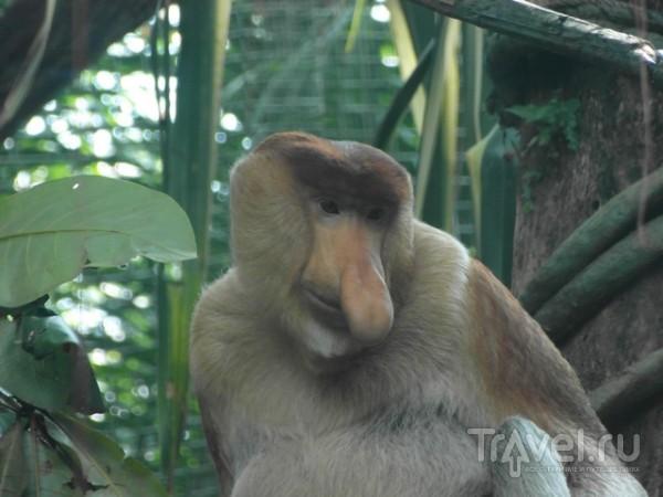 Сингапурский зоопарк / Сингапур