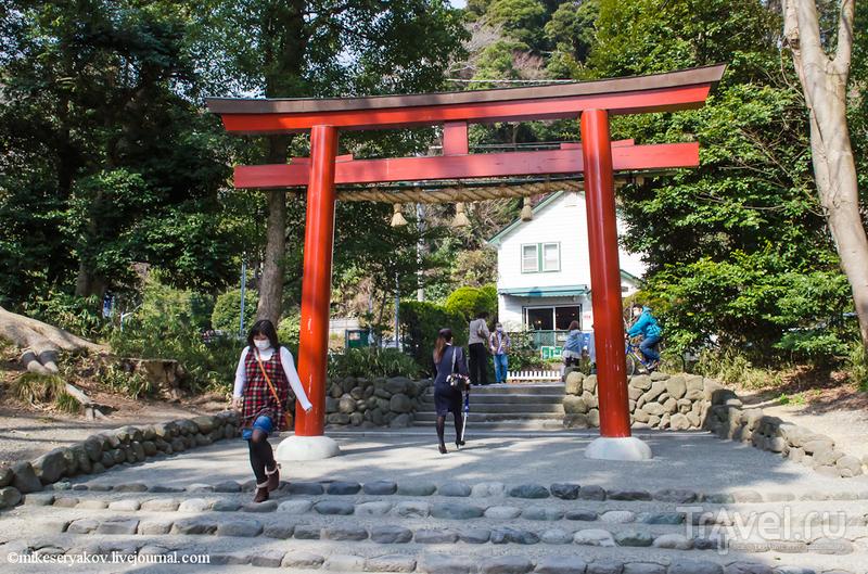 Храм Цуругаока - Хатиман - Гу в Камакуре, Япония / Фото из Японии