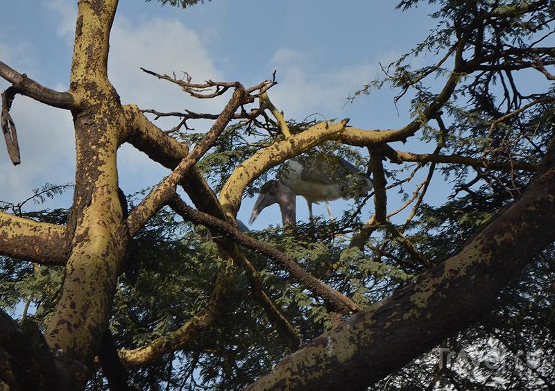 Птицы Найроби / Фото из Кении