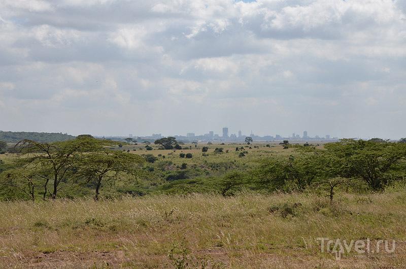 Панорама национального парка и города Найроби / Фото из Кении