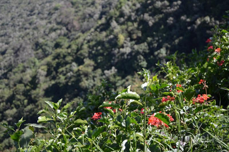 Растения Рифтовой долины / Фото из Кении