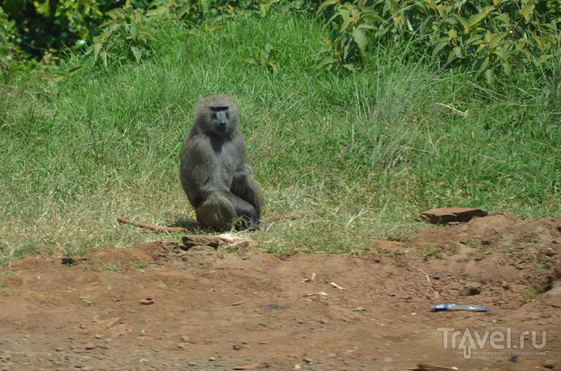 Житель Рифтовой долины / Фото из Кении
