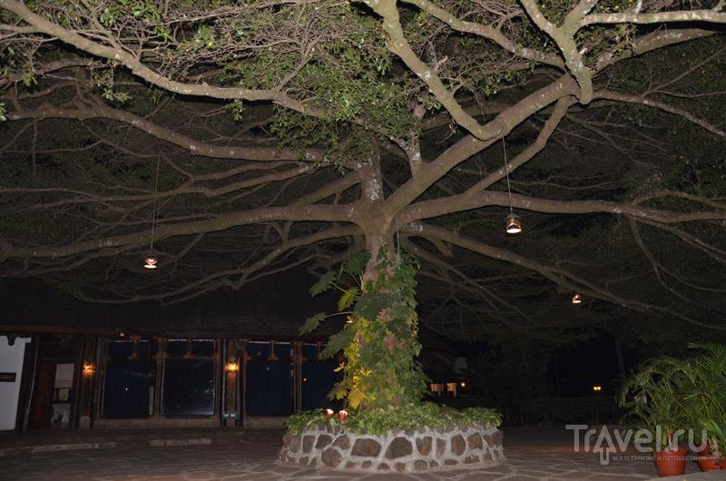 Safari Park Hotel ночью / Фото из Кении
