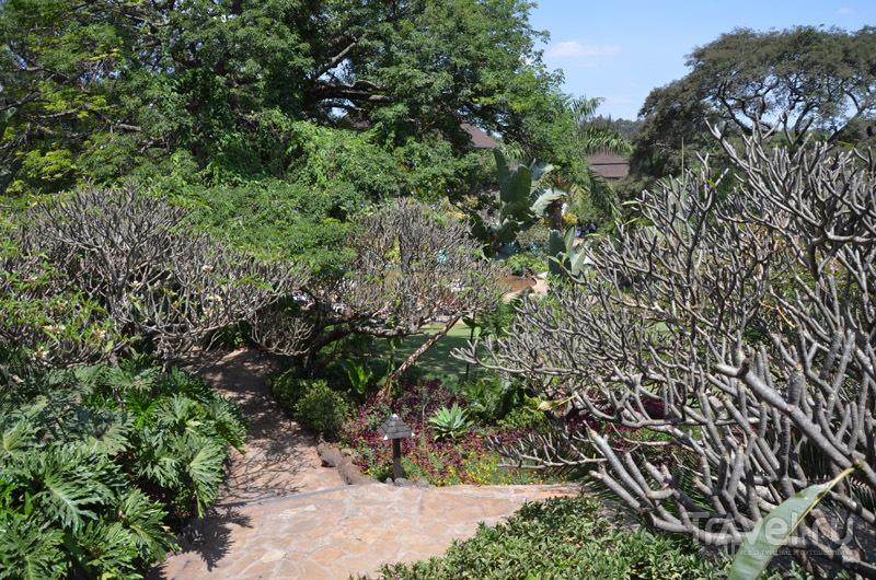 Парк в Safari Park Hotel / Фото из Кении