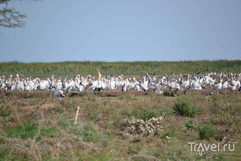 Самостоятельное сафари в Танзании. Парк Озера Маньяра / Танзания