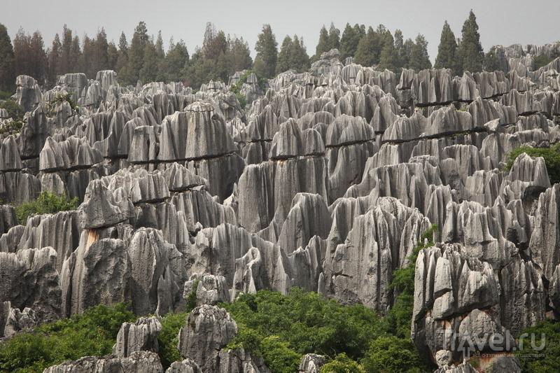 Китай, каменный лес в Шилине / Китай