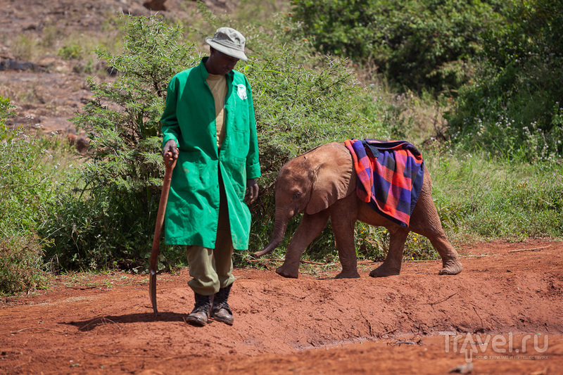 Слоновий приют. Кения / Кения