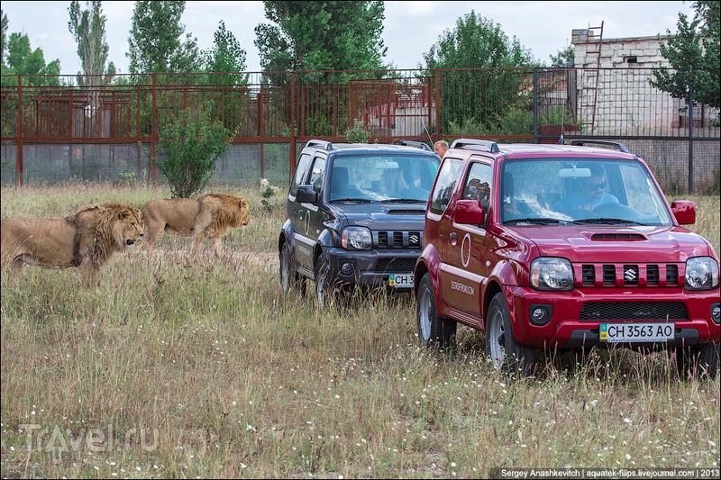 Крымское сафари. На джипе ко львам / Украина