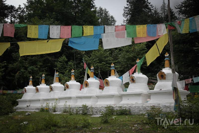 На внедорожниках в Тибет. Лес Мертвых в Боми / Китай