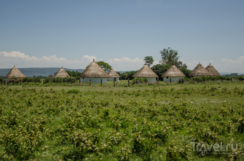 В Кении / Фото из Кении