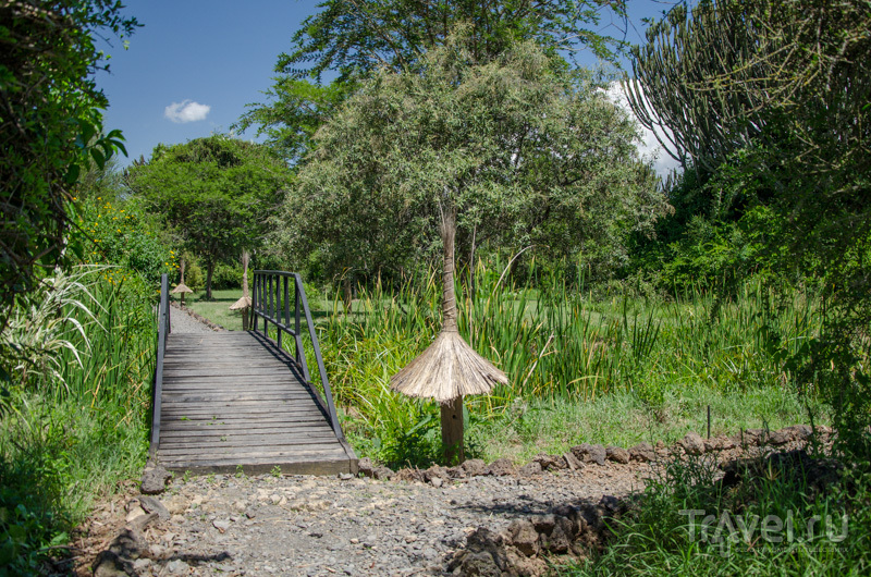 Национальный парк Накуру в несезон / Фото из Кении