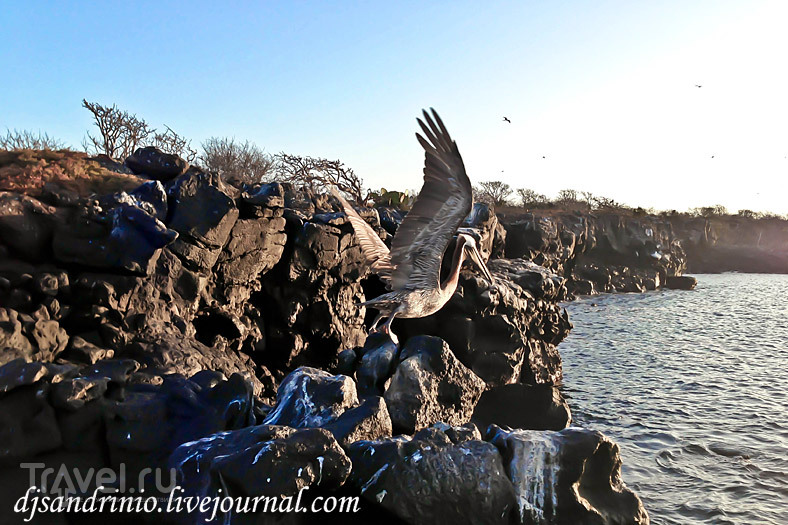 The Galápagos, North Seymour or The bird's paradise / Эквадор