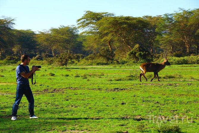 Это удивительная Африка. Кения / Кения