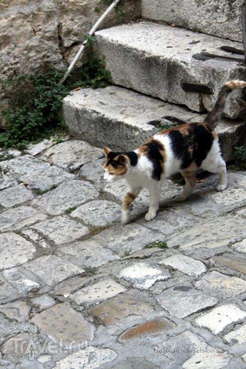 Трогир - прогулки по вечерам / Хорватия
