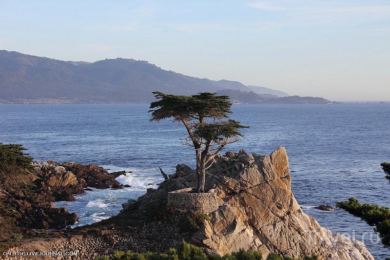 California coast / Фото из США