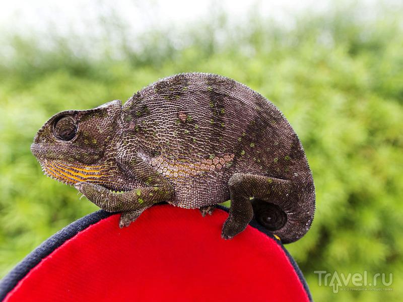 Фауна Анголы / Ангола