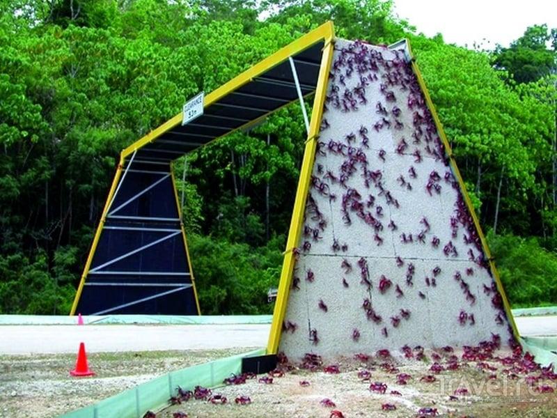 Ради благополучной миграции крабов перекрывают трассы и строят временные мосты / Австралия