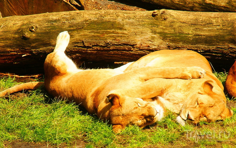 Serengeti Safari Park / Германия