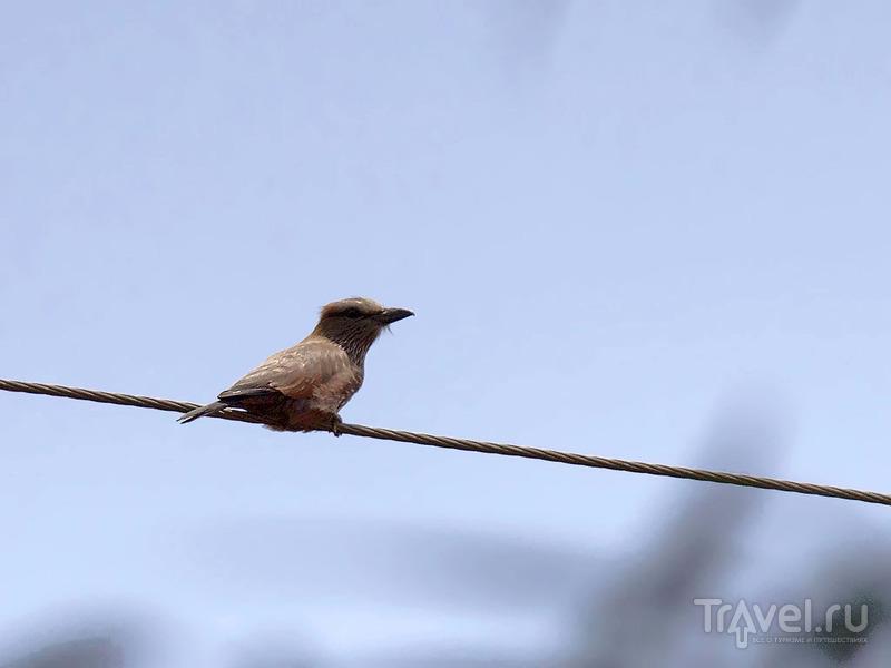 Птицы Анголы / Ангола