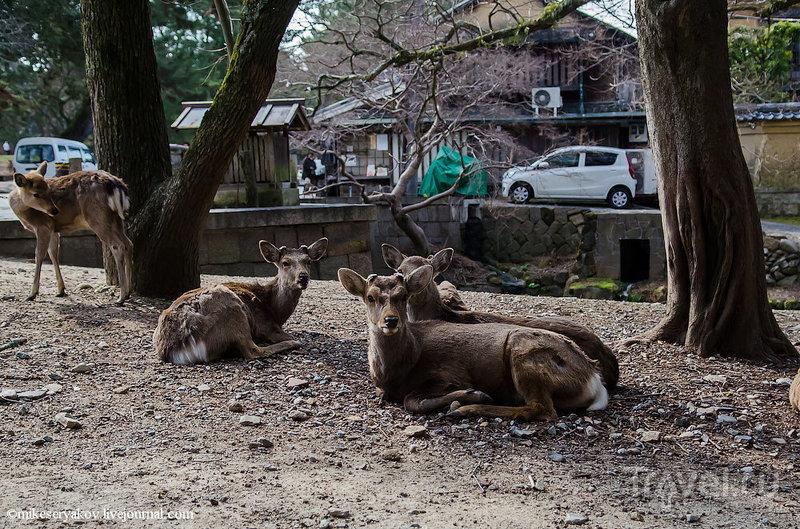 В городе Нара, Япония / Фото из Японии