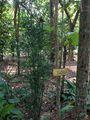 Табличка в саду / Шри-Ланка