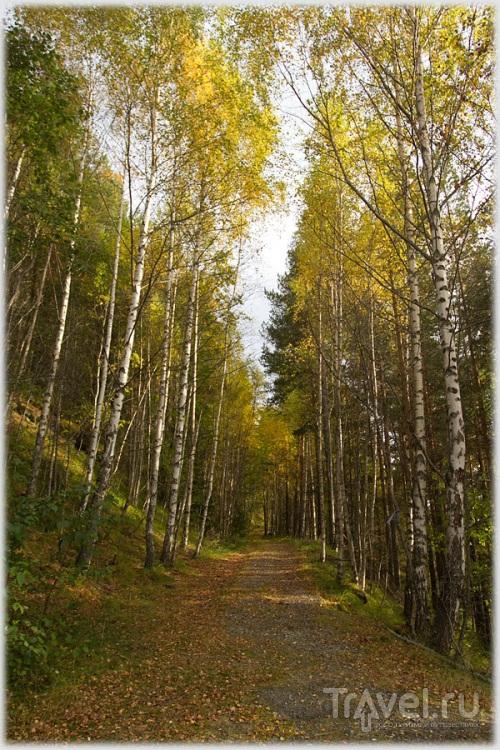 Норвегия. Краски осени / Фото из Норвегии