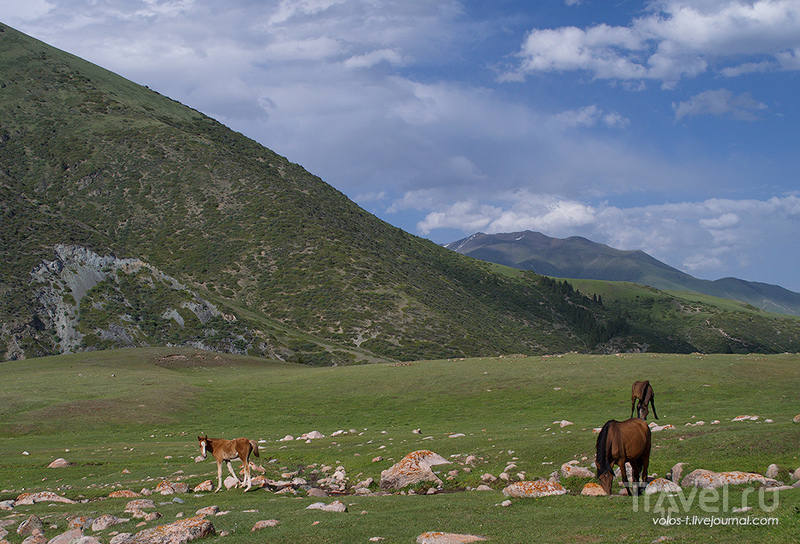 Киргизия. Григорьевское ущелье / Фото из Казахстана