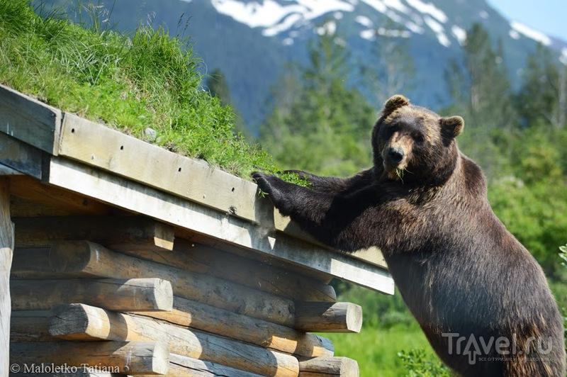 На Аляске, США / Фото из США