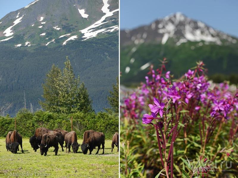 Аляска. Из Анкориджа в Хомер / Фото из США