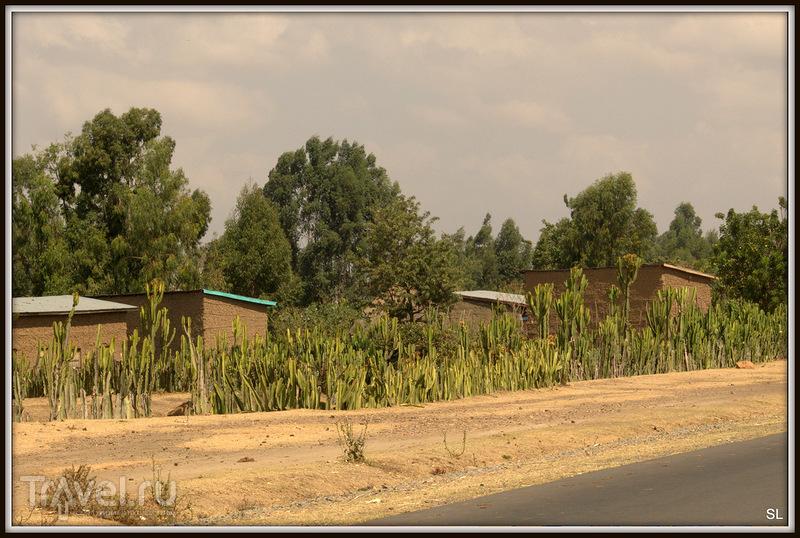Wondo Genet - Goba / Фото из Эфиопии