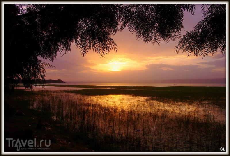 На озере Аваш, Эфиопия / Фото из Эфиопии