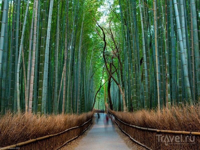 В сувенирных лавках рядом с главным входом можно приобрести изготовленные из бамбука сувениры, Япония / Япония
